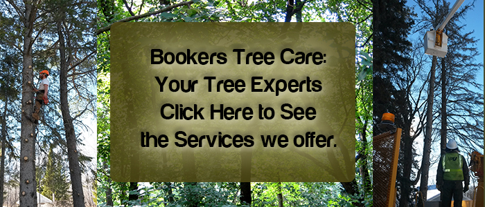 Bookers Tree Care in Northern Minnesota offers a variety of services. Click here to see our services page.